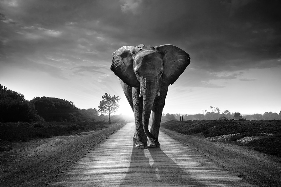 3 Tips to Create Black and White Prints that Really Impress